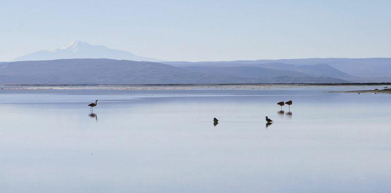 Salinas Lagoon And Wildlife Tour
