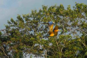 Amazon Expedition Tambopata 4 Days