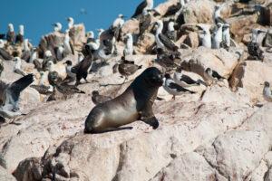 Ballestas Island And Paracas Reserve